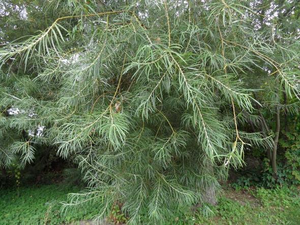 aus der Nähe - (Baum, Blaetter, Ufernähe)
