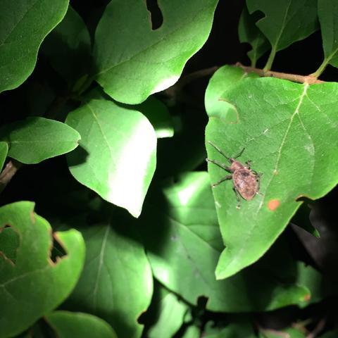 Hier sieht man den Käfer. - (Tiere, Biologie, Natur)