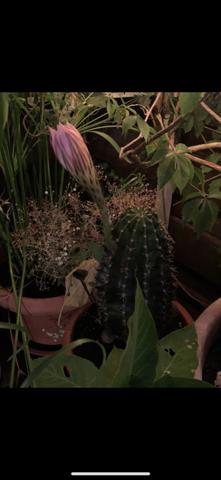 Wie heißt dieser Kaktus?