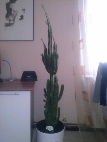 wie hei t dieser kaktus und was kann ich tun pflanzen natur blumen. Black Bedroom Furniture Sets. Home Design Ideas