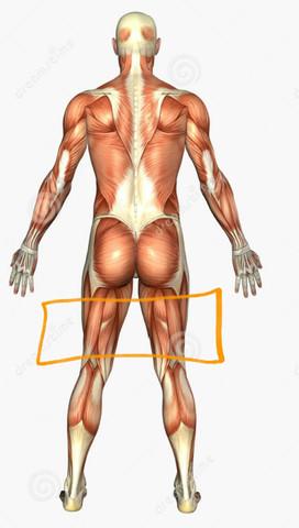 Wie heißt dieser Teil vom Körper (orange markiert) - (Körper, Menschen, Anatomie)