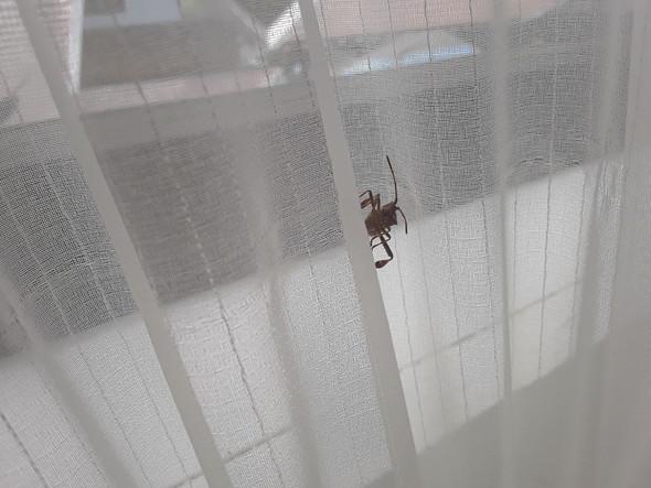 Wie heißt dieser/-s Käfer/Insekt?
