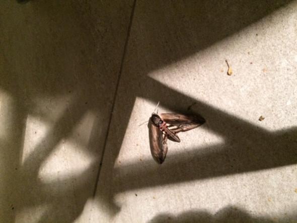 Insekt  - (Tiere, Garten, Insekten)