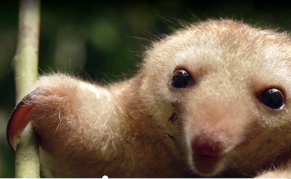 Wie heißt dieses Tier aus Peru?