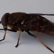 seitlich - (Tiere, Sommer, Bienen)