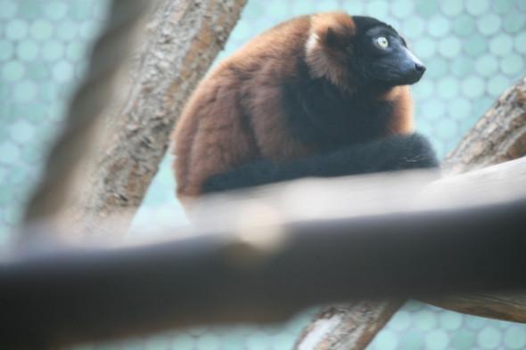 - (Tiere, Affen)