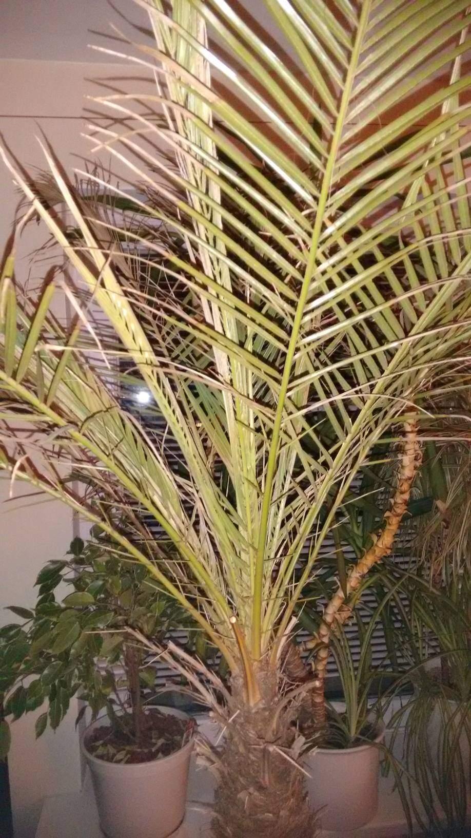 Wie heißt meine Palme? (Pflanzen, Pflanzenpflege