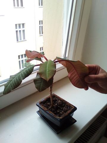 Das ist die Kleine - (Pflanzen, Pflanzenpflege, Zimmerpflanzen)