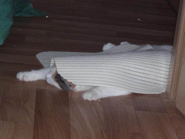 schlafen dort - (Katze, schwanger, Geburt)