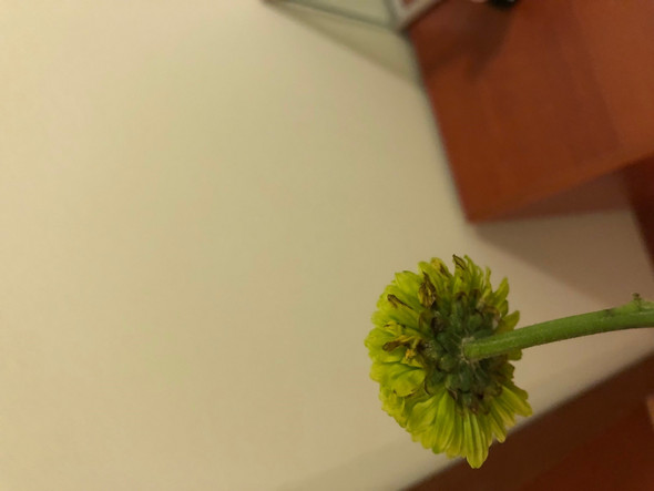 - (Hausaufgaben, Garten, Pflanzen)
