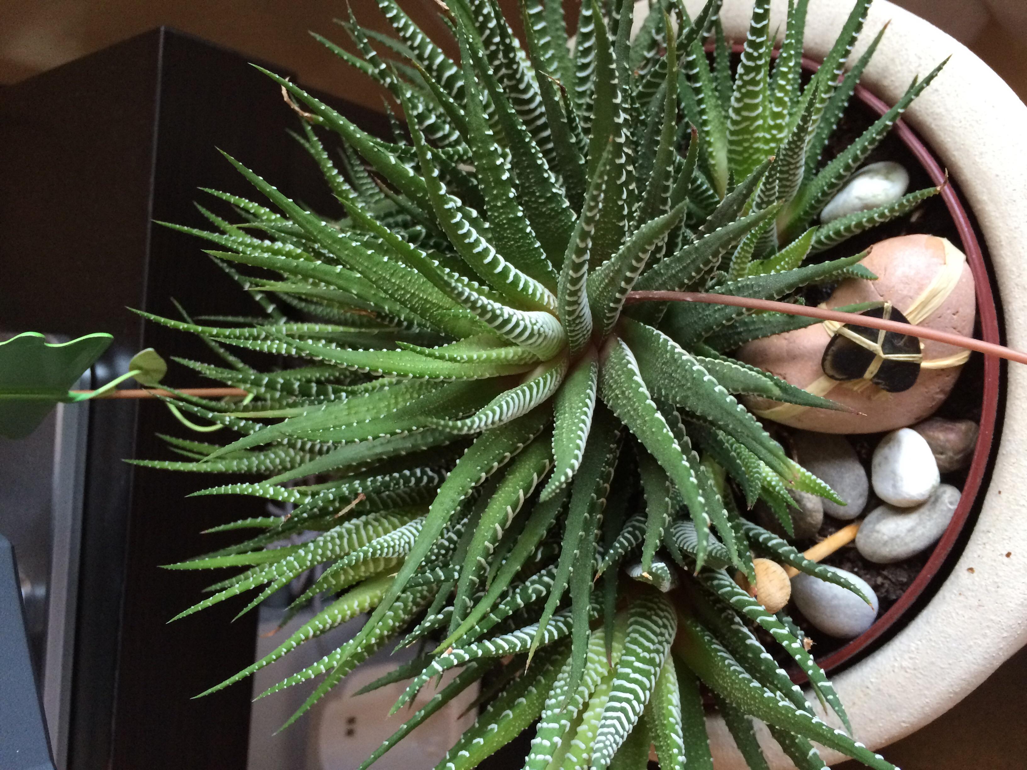 Wie Ist Der Name Dieser Pflanze (siehe Foto)? (Pflanzen