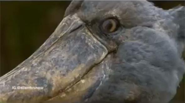 Vogel  - (Tiere, Menschen, Natur)