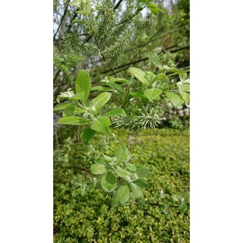 Baum - (Pflanzen, Baum, schularbeit)