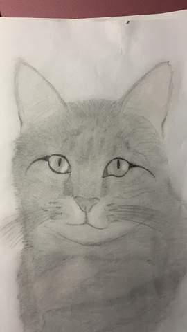 - (zeichnen, Warrior Cats, Zeichnung)