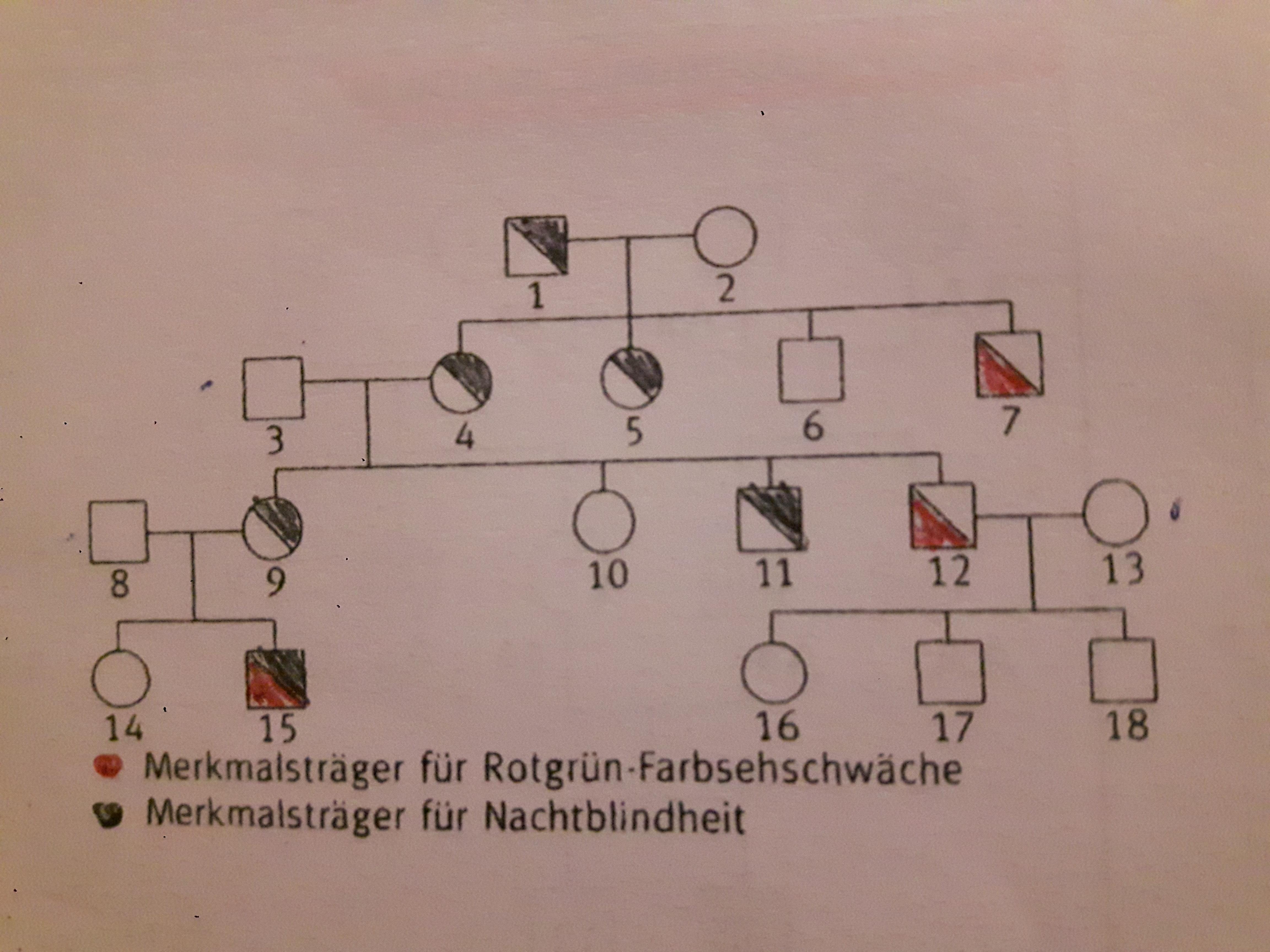 Rot Grün Schwäche Vererbung Jtleigh.com   Hausgestaltung .