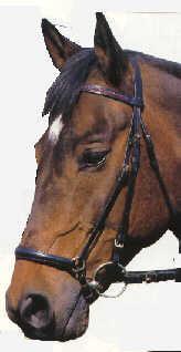 So  - (Pferde, reiten, Reithalfter)