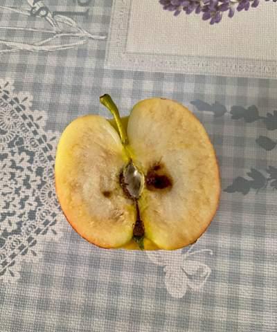 Wie kann dass sein das Äpfel von innen nach außen Schimmeln?