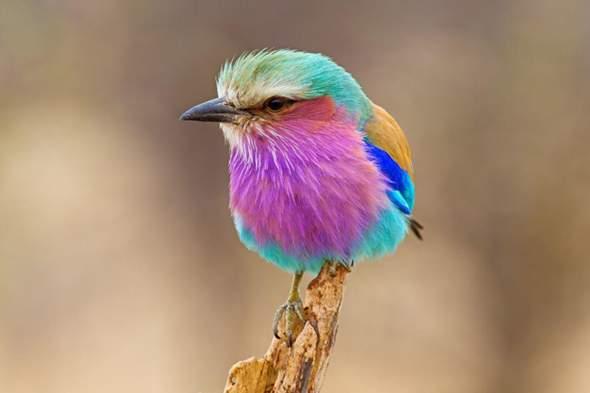 Wie kann durch Zufall ohne eingriff von einer Intelligenten Macht solche schönen Tiere entstehen?