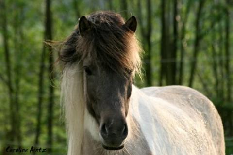 - (Pferde, Reiten, Geld verdienen)