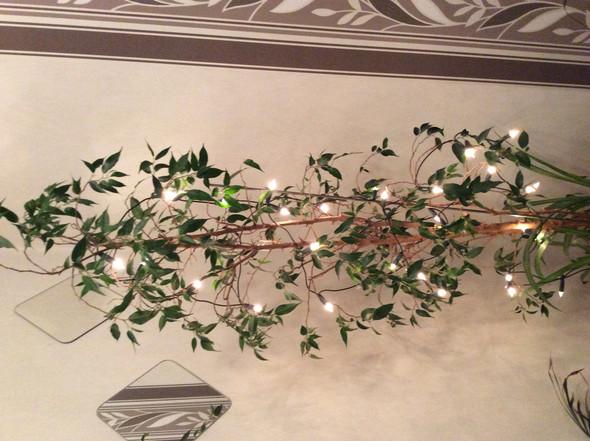 Bäumchen  - (Natur, Welt, Baum)
