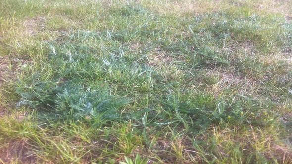 Unkraut teilweise noch mehr an manchen Stellen - (Garten, kaputt, wachsen)