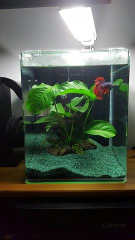 Wie kann ich dieses Aquarium pimpen?