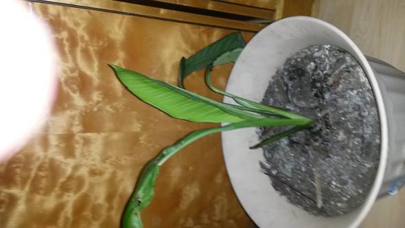 - (Pflanzen, retten)