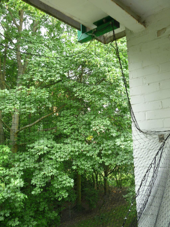 wie kann ich meinen balkon richtig katzensicher gestalten. Black Bedroom Furniture Sets. Home Design Ideas