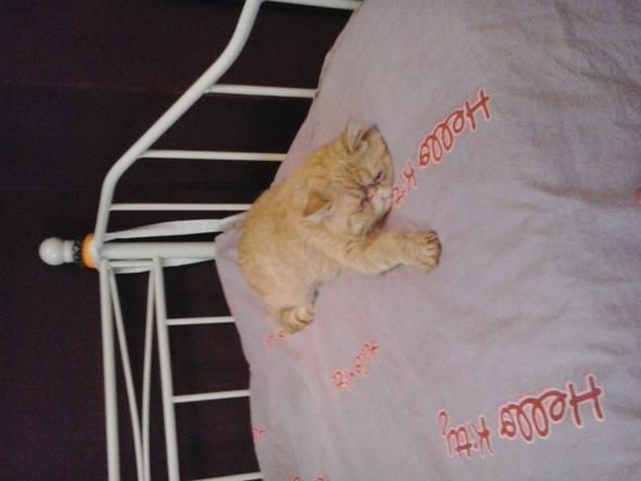 Da ist er !! Garfield  ..  - (katzenschnupfen, Katzenschupfen)