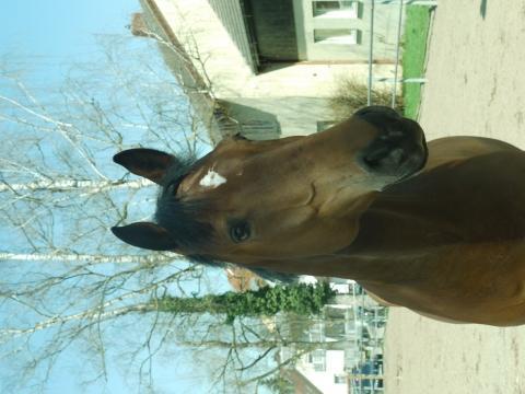 Mein  Hübscher vor gerade 7 Tagen ungefähr  :) - (Pferde, Reiten)