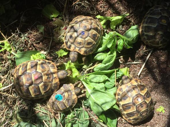 Wie kann ich Nagellack vom Panzer meiner Schildkröte entfernen?