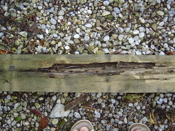 Holzfußboden Gartenhaus ~ Wie kann ich stark beschädigtes holz ausbessern? gartenhaus