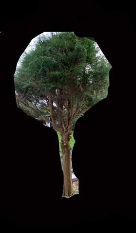 Wie kann man Baum retten?
