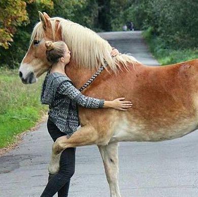 wie kann man ein pferd dazu bringen einen zu umarmen. Black Bedroom Furniture Sets. Home Design Ideas