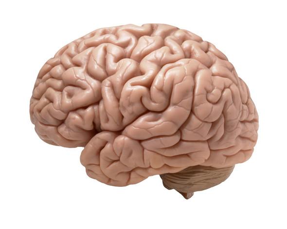 Das Gehirn - (Foto, Word, Bereich einfärben)