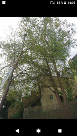 Wie Kappe ich diesen Baum?