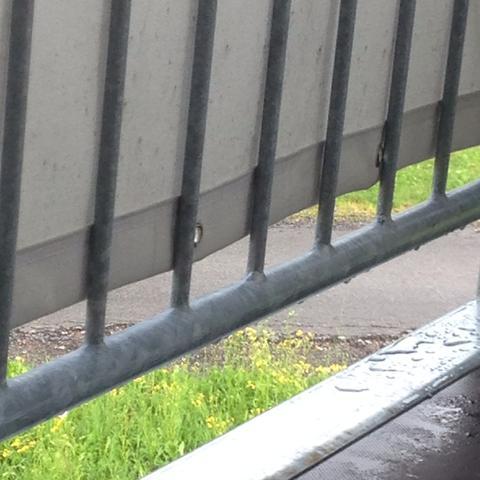 Balkon - (Katze, Katzen, Balkon)