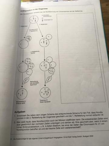 Wie können der der Meiose überall 22 andere Chromosomen in den Zellen und Polkörperchen sein, wenn die sich doch teilen?