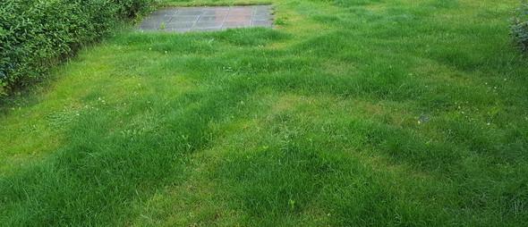 Wie kriege ich den Rasen gleichmäßig gut gepflegt?