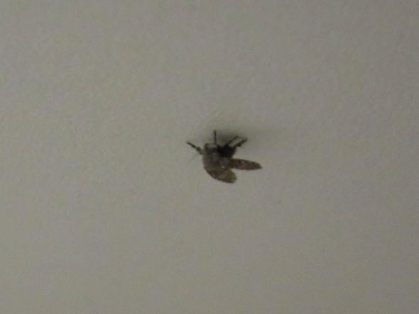 Kleine Fliege - (fliegen, Mücken)
