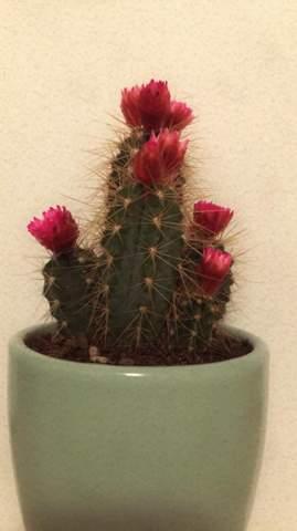 Wie kümmere ich mich um meinem Kaktus?