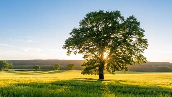Wie lange braucht ein Baum um zu Wachsen?