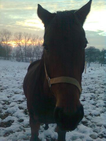 im winter - (Pferde, Winter)