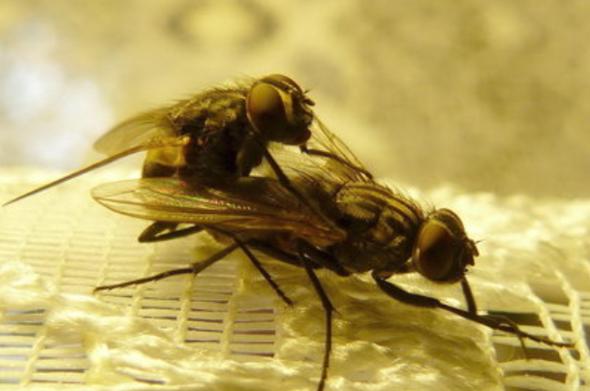 Eintagsfliegenpaarung - (Leben, Eintagsfliegen, Lebensempfindung)
