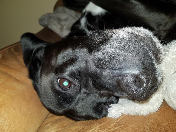 wie lange hat mein hund noch zu leben kosten haustiere beerdigung. Black Bedroom Furniture Sets. Home Design Ideas