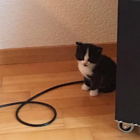 Und es ist auch seine Schwester abgehauen falls jemand sie finden will, - (Katze, verschwunden)