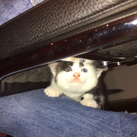 Schwester - (Katze, verschwunden)