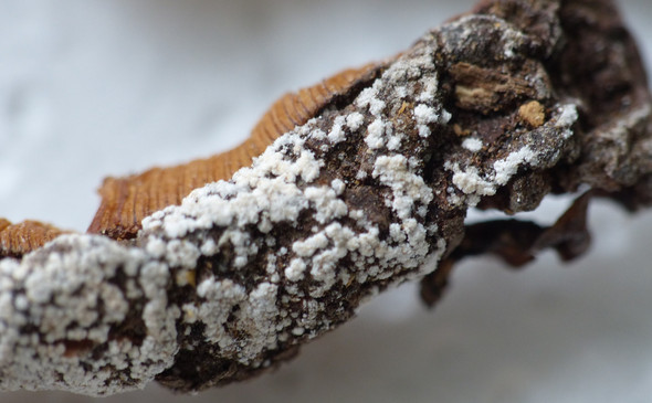 Pilzbelag 1 - (Schimmel, Pilze)