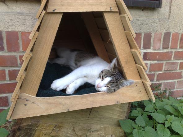 wie lange waren eure katzen kater schon mal verschwunden katze paarungszeit. Black Bedroom Furniture Sets. Home Design Ideas