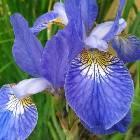 Die Blume :) - (Pflanzen, Natur, Blumen)